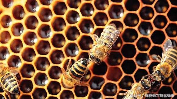 蜂蜜能放多久? - 每日頭條