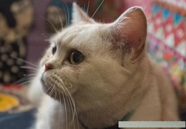 從貓咪睡覺的地方,可以看它對主人的喜歡度 - 每日頭條