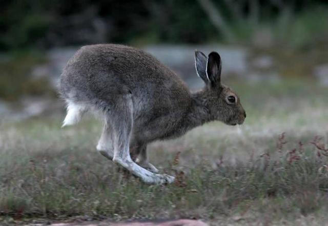 顛覆三觀!沒想到兔子竟然開始吃肉了,野兔,寵物兔無一倖免! - 每日頭條