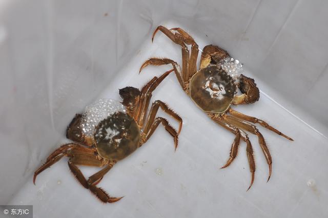 螃蟹怎麼保存?冷藏or冷凍 - 每日頭條