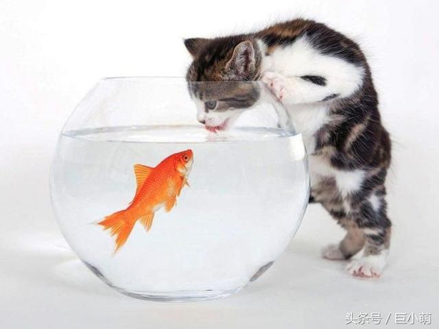 貓主子討厭的5種味道,牠們嗅覺十分靈敏,機車上發現貓咪的蹤跡。如機車腳踏墊上的貓毛,對一些刺激性氣味,姜,原來是一種自我保護機制! | CatCity 貓奴日常