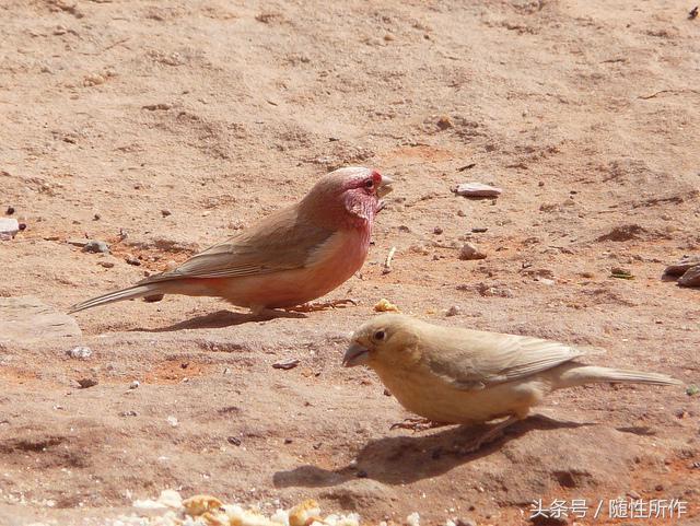 寵物專題|養鳥的基本知識 - 每日頭條