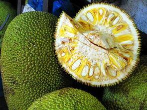 長在樹上的菠蘿 - 每日頭條