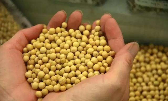 為什麼中國大量進口美國大豆而不收購我們國內自己產的大豆? - 每日頭條
