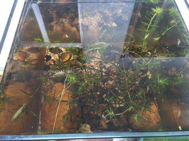 做個小的生態缸。教你如何養活這些小魚小蝦 - 每日頭條