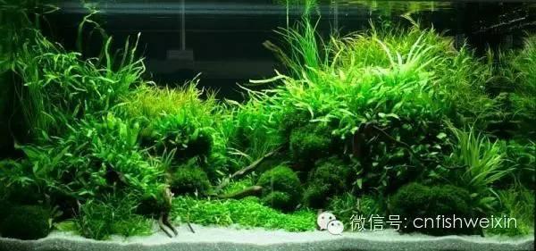 CNfish 水草養殖淺談小型水草缸是日常管理與維護 - 每日頭條