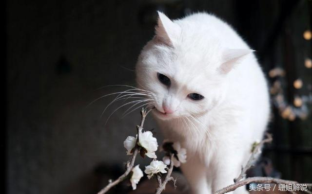 剛養的小貓一直叫很煩?這些常識會幫到你 - 每日頭條