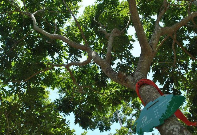 什麼人適合選用海南黃花梨枕頭?永安紅木提供專家建議 - 每日頭條