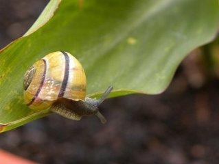 蝸牛的生活習性介紹 - 每日頭條