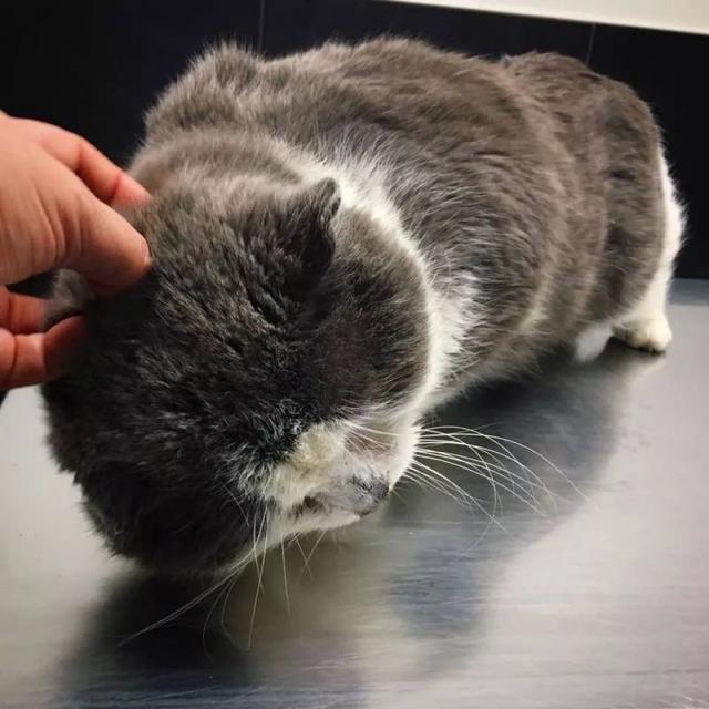 流浪貓因生病被救助,檢查發現這是一隻貓愛滋 - 每日頭條