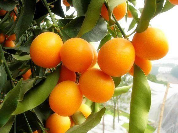 這十種水果很難吃。但是還是有人愛吃 - 每日頭條