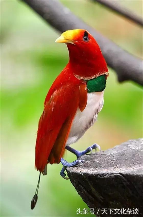 「美圖欣賞」全世界最罕見的鳥——真是大開眼界! - 每日頭條