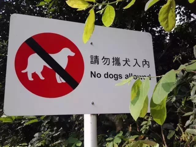 能否把「遛狗不栓繩」作為遛狗人素質低的表現之一? - 每日頭條