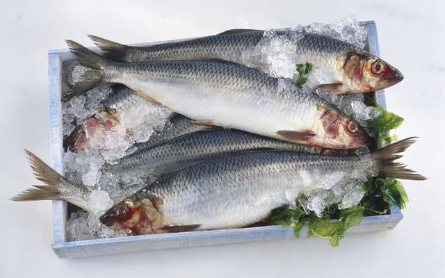 8大最能益智護心的魚類食物! - 每日頭條