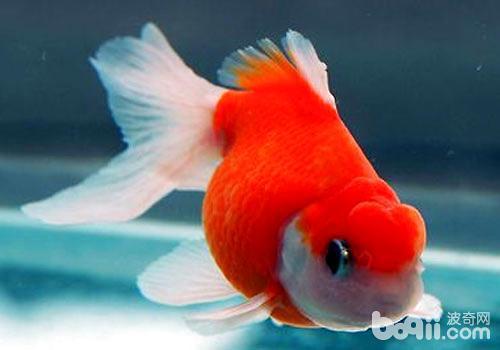 養魚水為什麼會變綠? - 每日頭條