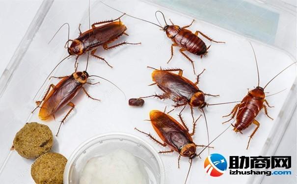 蟑螂對人類有哪些好處 被蟑螂咬了怎麼辦? - 每日頭條