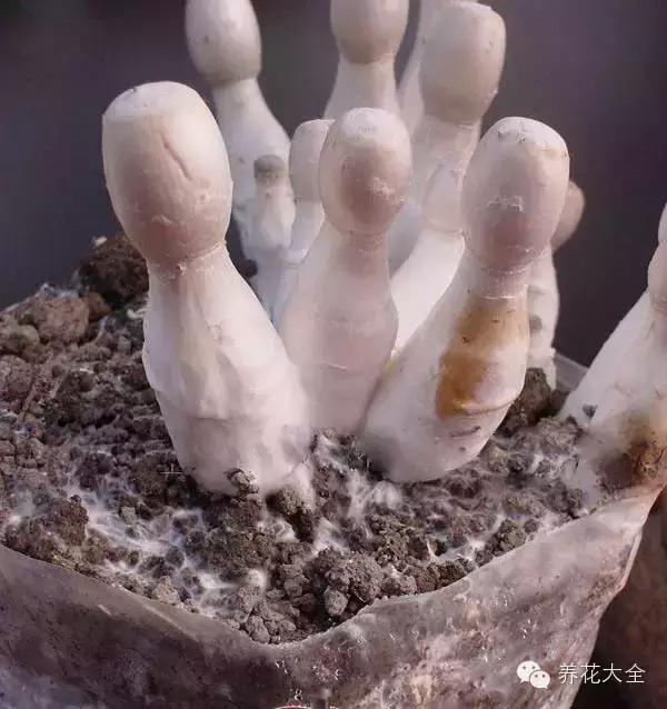 絕技 | 在家種植物。不如種蘑菇! - 每日頭條