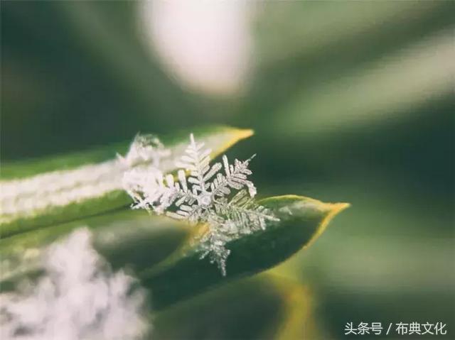 小雪·大美 - 每日頭條