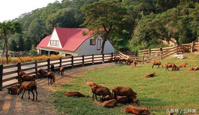 看了臺灣的休閒農場,才知道什麼叫差距! - 每日頭條