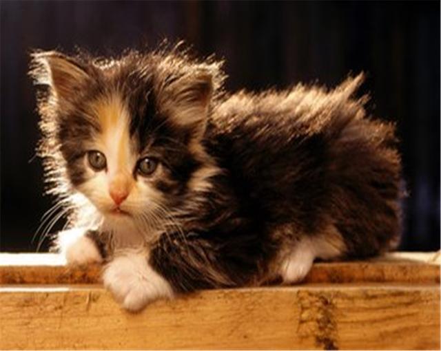 原來貓咪輕咬主人是這個意思。學會這個方法。再也沒咬過 - 每日頭條