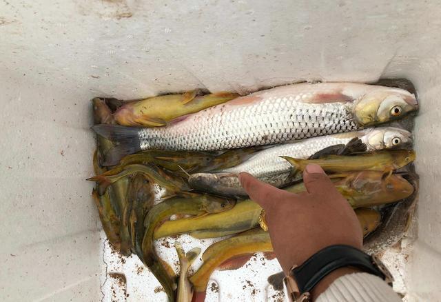 第一次到黃河釣魚。沒想到水這麼髒。不過釣上的魚很美麗 - 每日頭條
