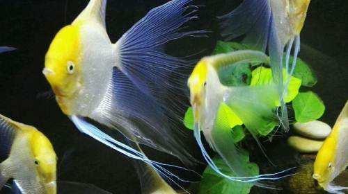 新手養殖觀賞魚。最基本的理論知識有哪些? - 每日頭條