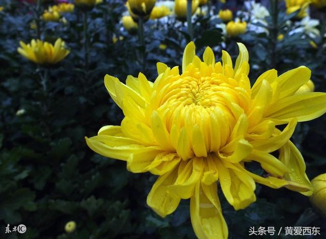 秋天的花開秋天果 原來有這麼多花兒是開在秋天的! - 每日頭條