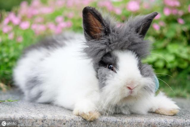 養一隻兔子吧。很可愛的那種!教你怎麼養寵物兔~ - 每日頭條