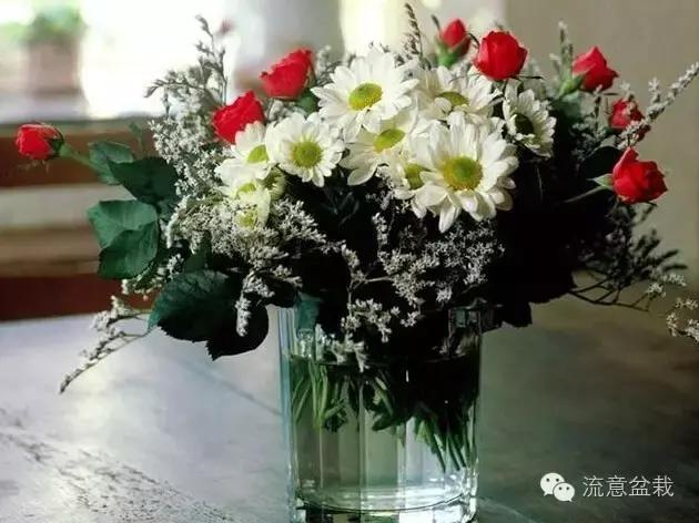 鮮花如何保鮮?延長花期 - 每日頭條