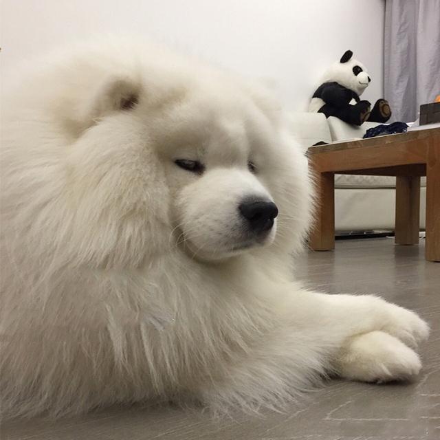 狗不能吃巧克力。但是狗狗能吃大蒜嗎? - 每日頭條