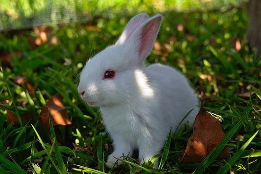哺乳動物兔子能活多久?怎麼養才會長壽? - 每日頭條