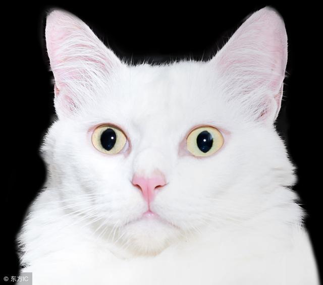 到底該怎麼給貓咪打疫苗呢?看完這些別再別騙了 - 每日頭條