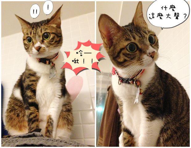 讀貓術:喵星人到底在喵什麼?(下) - 每日頭條