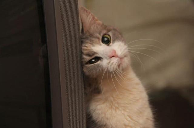 讓你的中秋更加歡樂的貓咪趣照 - 每日頭條