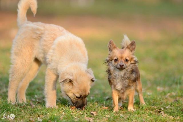 狗狗得了細小怎麼辦?會致命嗎?病毒會傳播嗎? - 每日頭條