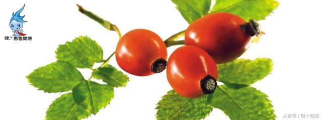 健十養生——薔薇果的養生價值 - 每日頭條