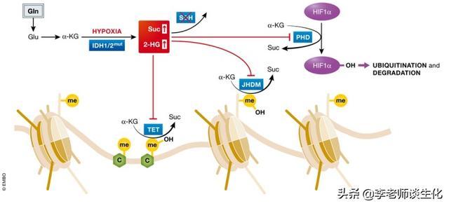 胺基酸的合成與必需胺基酸(一) - 每日頭條