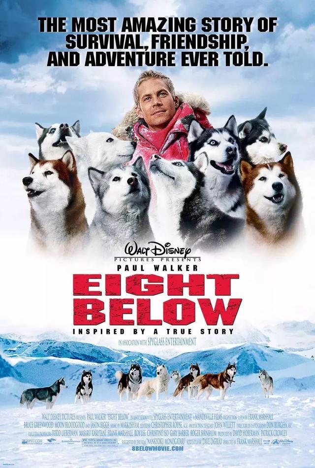 這30部評分超高的寵物電影,會讓你瘋狂迷上小動物 - 每日頭條