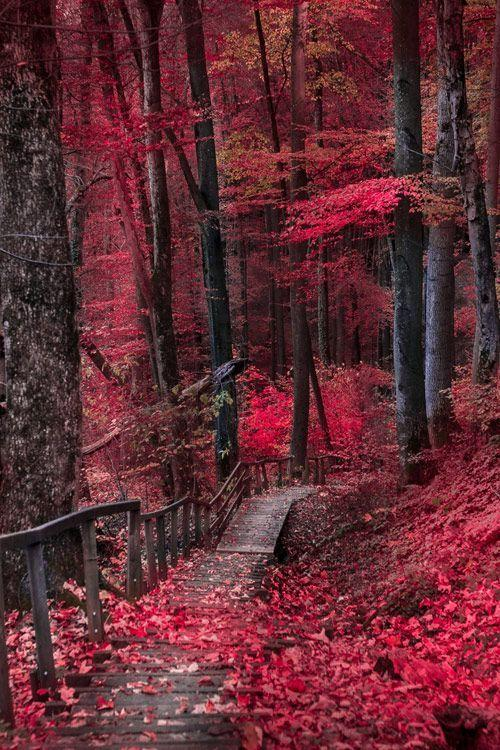 9首描寫秋季的經典古詩,賞盡秋色美,品盡人生味 - 每日頭條