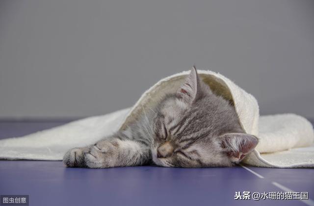 貓咪打完疫苗發燒了,是過敏反應嗎?貓咪過敏了到底是怎樣的? - 每日頭條