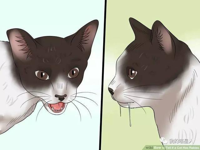 被貓咪抓傷或者咬傷會得狂犬病嗎?要不要打狂犬疫苗? - 每日頭條