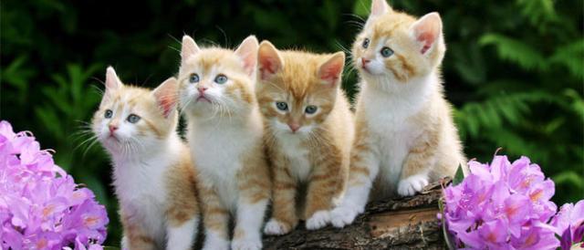 小故事大智慧:九尾貓的第九條尾巴 - 每日頭條
