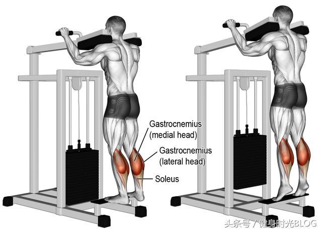 小腿的肌肉與訓練方法 - 每日頭條