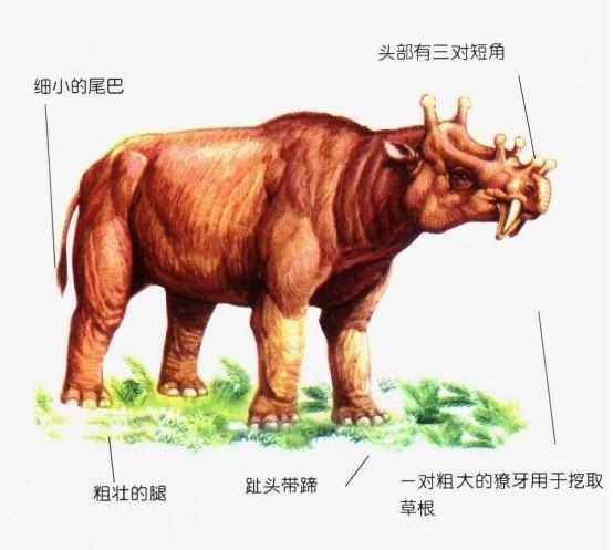 恐龍滅絕之後人類稱霸以前的巨獸們(上) - 每日頭條