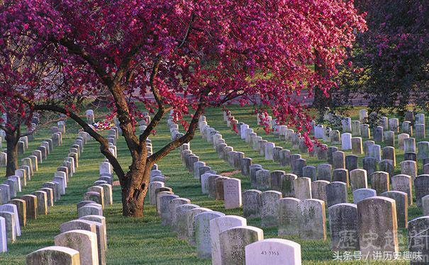 墓地祖墳種樹對風水究竟好不好? - 每日頭條