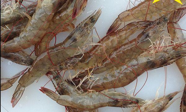 大蝦有什麼營養價值?大蝦千萬不能和什麼食材混著吃? - 每日頭條