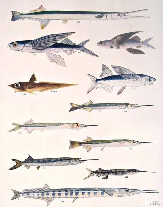 魚 · 圖譜——世界珍藏版海洋生物圖譜 - 每日頭條