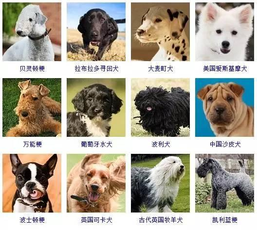 一篇文章讓你分清所有狗的品種 - 每日頭條
