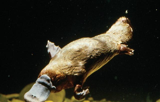 5種最不尋常的毒性動物和它們的化學武器 - 每日頭條