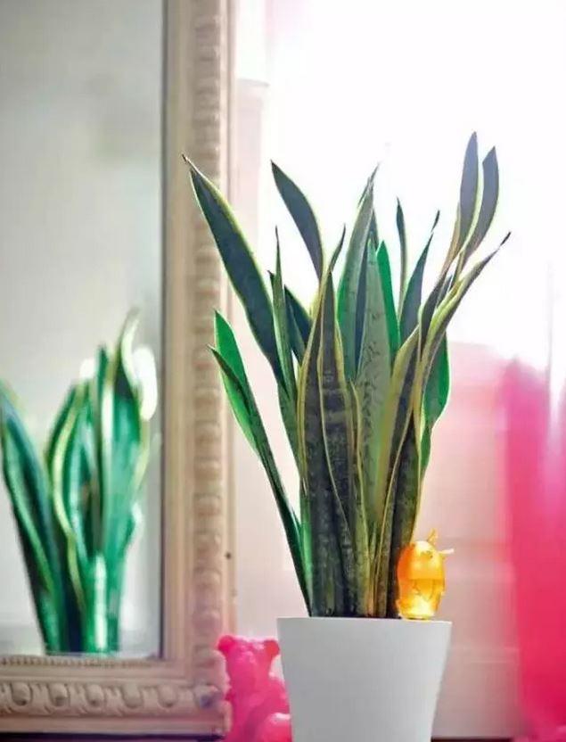 新房裝修甲醛污染?這12種花吸收有害物質一個比一個厲害! - 每日頭條